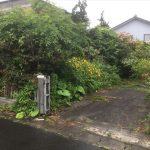 「遺品整理前の庭の片づけ」梅雨の合間のカマキリ作戦