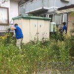 家財整理オプション|庭の草刈り中にハチ..