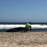 サーフィンの大会🏄